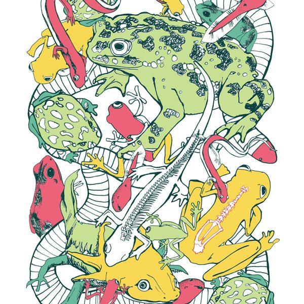 vertebrates-amphibians