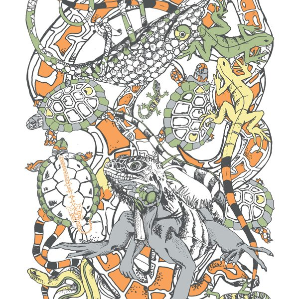 vertebrates-reptiles
