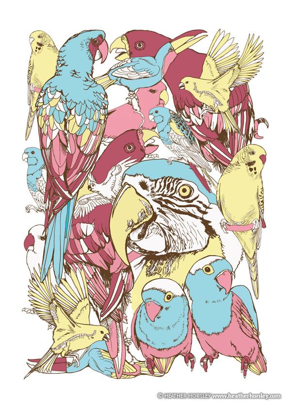 vertebrates-birds